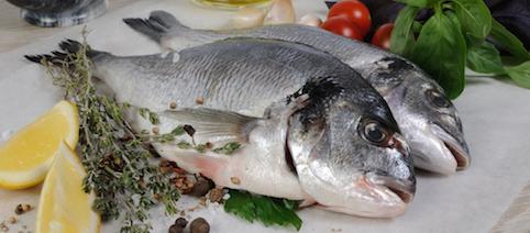 Aquaculture Agroinvest